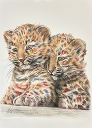 Cubs Study Sketch by Hayley Goodhead -  sized 8x12 inches. Available from Whitewall Galleries